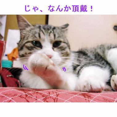 なんか頂戴ゴマ.JPG