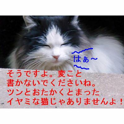 みそのイヤミ猫じゃないよ.JPG