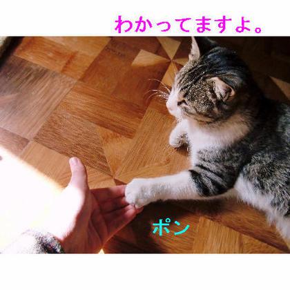 ゴマと握手.JPG