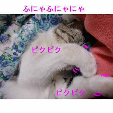 ゴマ寝ながらダンス.JPG