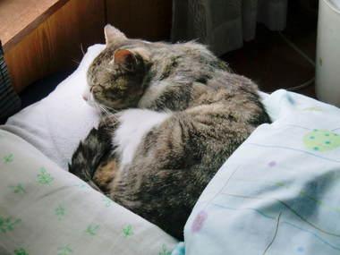ベッドでぐっすり2.jpg