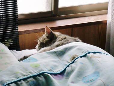 ベッドでゴマさん.jpg