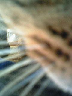 黒トラさんのドアップ.jpg