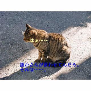 黒トラはぁ.JPG