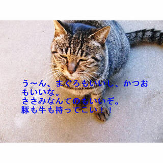 黒トラ全部.JPG
