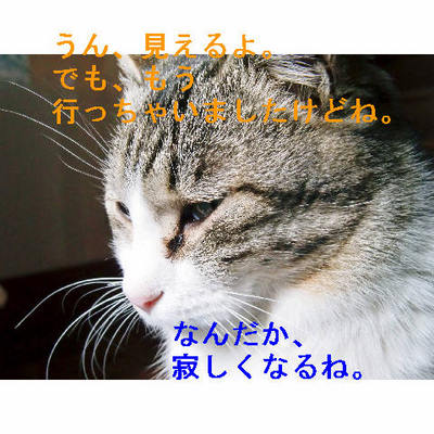 寂しいゴマ.JPG